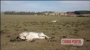 Polícia Ambiental, constata 672 cabeças de gado em estado caquético no Distrito de Carbonera em Umuarama