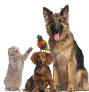 EXPO-GOIO anuncia novo atrativo para aexposição com pequenos animais
