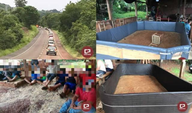 Rinha de Galo é fechada pela Polícia na cidade de Capanema-PR