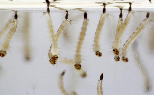 Infestação do Aedes aegypti na região da Comcam é alarmante, diz Regional da Saúde