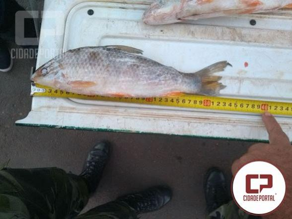 Pescador amador é preso por comercializar peixes fora da medida em Diamante do Norte