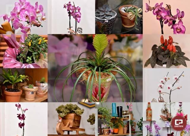 Venha conferir a variedade de plantas belíssimas que chegaram na Floricultura Quatro Estações