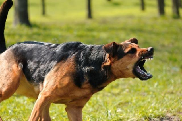 Cães impedem que fazenda em Goioerê seja furtada por ladrão