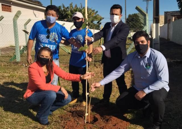 125 árvores serão plantadas em escolas municipais de Goioerê nesta terça-feira, 03