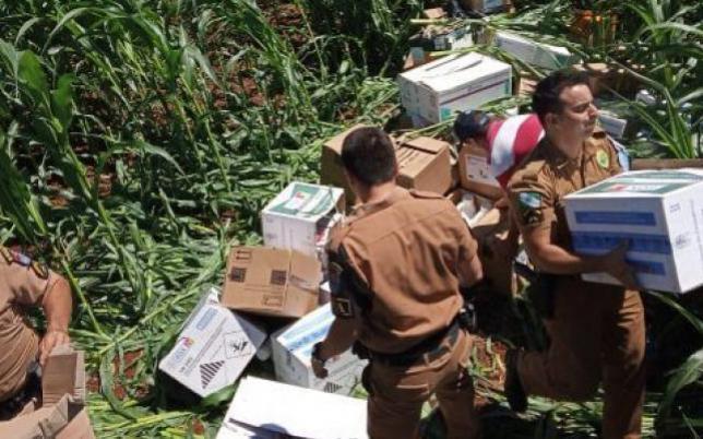 Agricultor encontra carga de defensivos agrícolas em plantação de milho