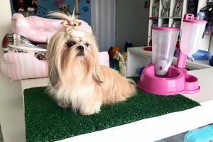Mon Petit - Pet Shop de Goioerê tem uma novidade incrível para você! Confira