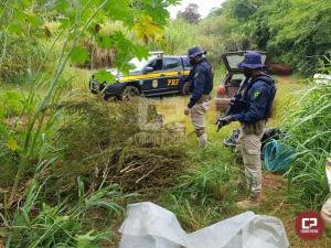 PRF estoura galpão de plantação de maconha no Paraná