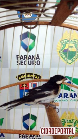 Polícia Ambiental Força Verde realiza apreensões em Cruzeiro do Oeste e Formosa do Oeste