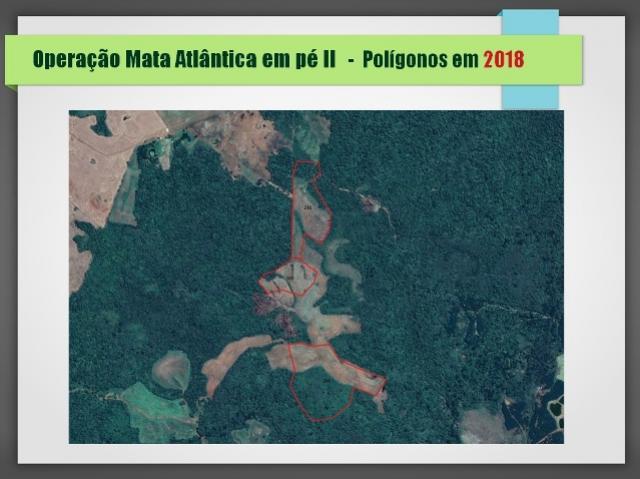 Operação Nacional Mata Atlântica em Pé confirma desmatamento de 2.890 hectares