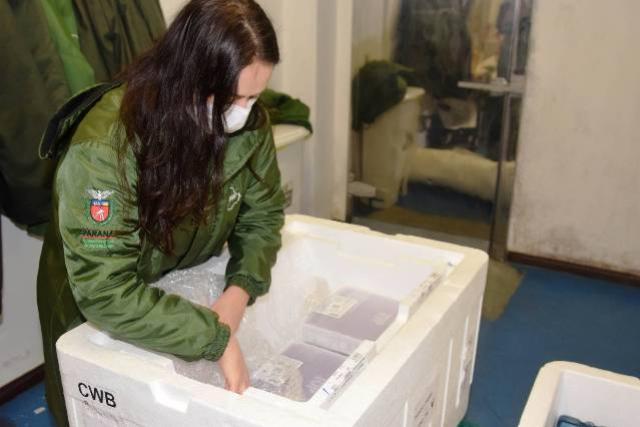 Mais de meio milhão de vacinas contra a Covid-19 começam a ser distribuídas para os municípios