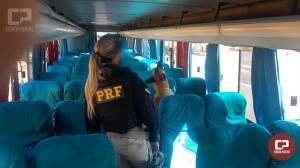 Operação Flagellum: 1ª fase termina com 871 kg de maconha e R$5,6 milhões em cigarros apreendidos no Paraná