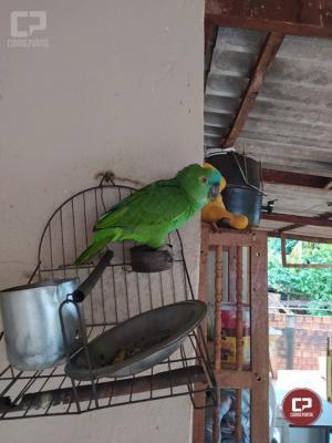 Batalhão de Polícia Ambiental desencadeia operação e apreende 391 aves mantidas em cativeiro no Paraná