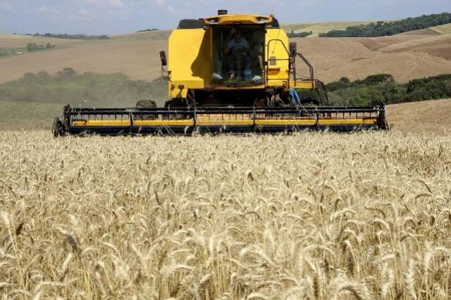 Mesmo com dias chuvosos das últimas semanas, colheita do trigo avança no Paraná