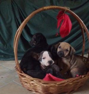 Oito filhotes de cachorro foram abandonados, a Associação Amaa precisa de sua ajuda para tratá-los!