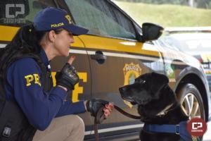 Cão labrador da PRF, Popó morre aos 14 anos de idade