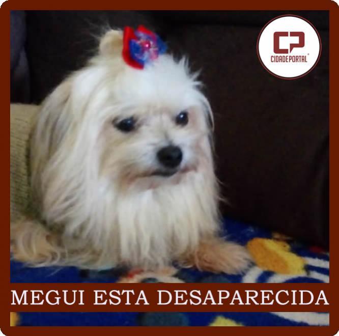 Procura-se a - MEGUI - esta cachorrinha esta desaparecida em Goioerê