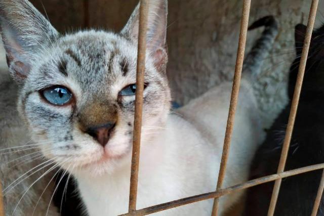 Em dois meses, 5.300 cães e gatos são esterilizados no Paraná