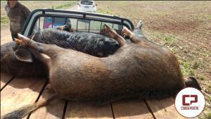 Dois caçadores foram presos em Rancho Alegre pela Polícia Militar por caça ilegal